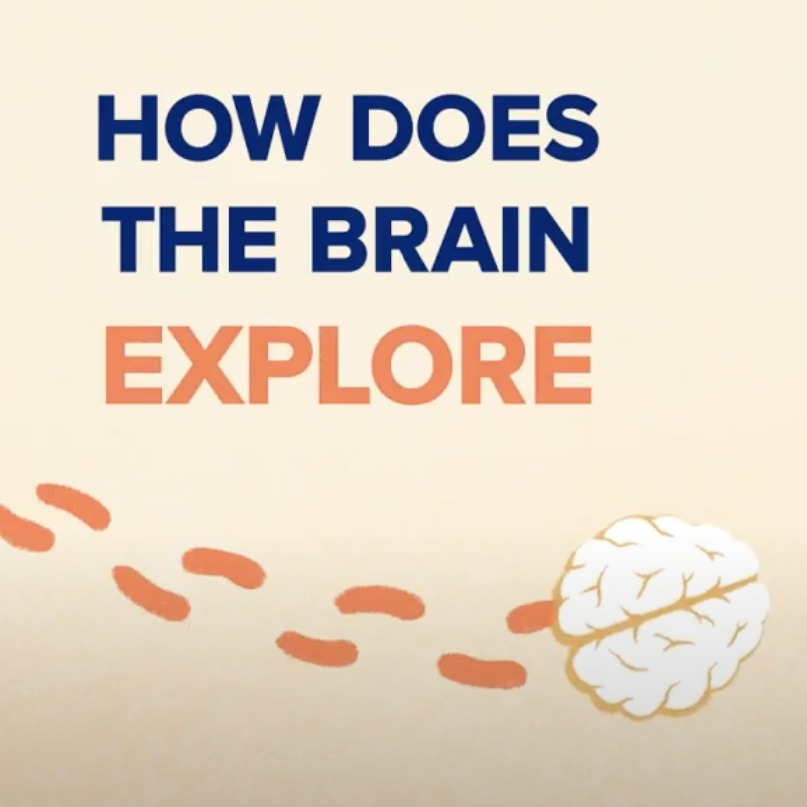 How Does the Brain Explore?