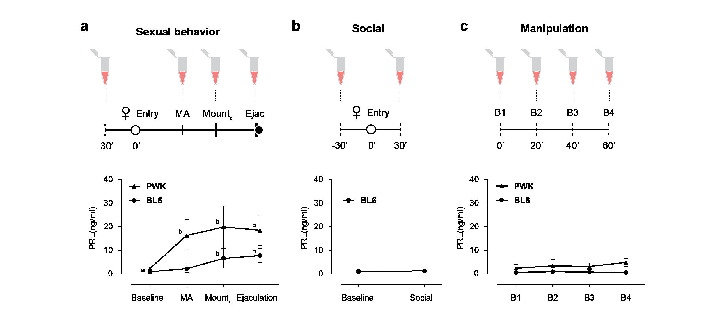 Manipulação da hormona prolactina em ratinhos macho