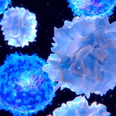 Myeloma Lymphoma Research Programme